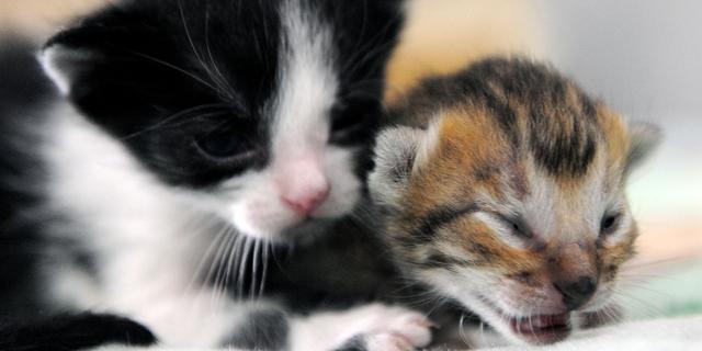 Kittens gedumpt bij Egelopvang in Roosendaal