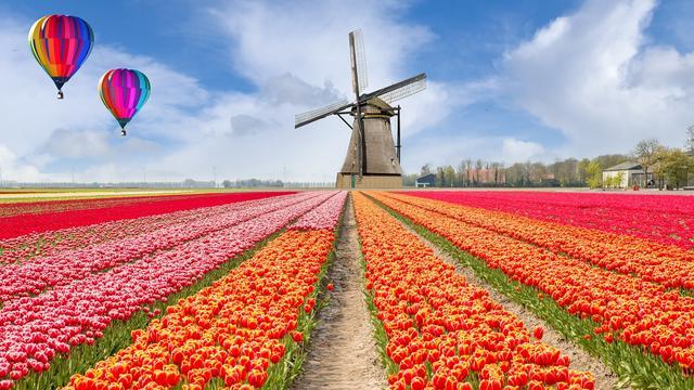 Drie Nederlandse dividendtoppers