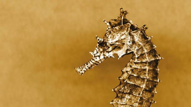 Nog vijf boeken in de race voor Jan Wolkers Prijs voor beste natuurboek