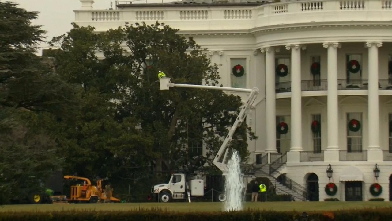 Hoveniers kappen stokoude tulpenboom bij Witte Huis