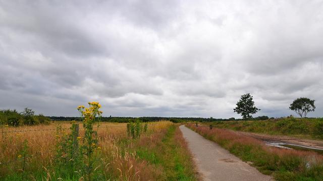 Weerbericht: Bewolkte dag met af en toe regen