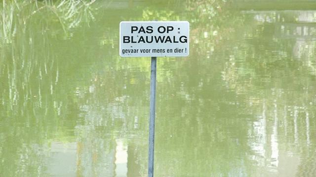 Blauwalgen in zwemplas De Kuil in Prinsenbeek