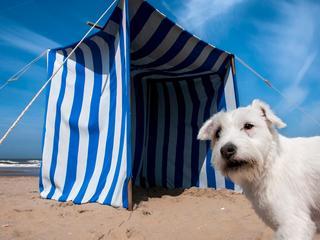Tips van Dierenbescherming om het warme weer draaglijk te maken