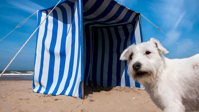 Tips: Wat te doen met huisdieren bij deze hitte