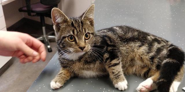 Kitten die aan boord van koeriersbus sprong herenigd met baasje