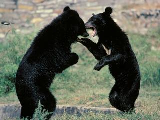 Hij waarschuwde eerder dat de volgende berenmarkt de ergste in ons leven zal zijn
