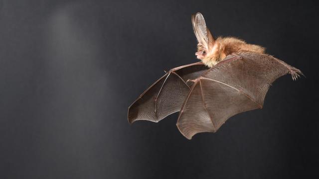 Renovatie Saint Louis in Oudenbosch begint na problemen door vleermuizen