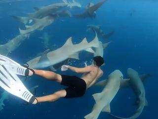 Snorkelaar omgeven door haaien bij Malediven