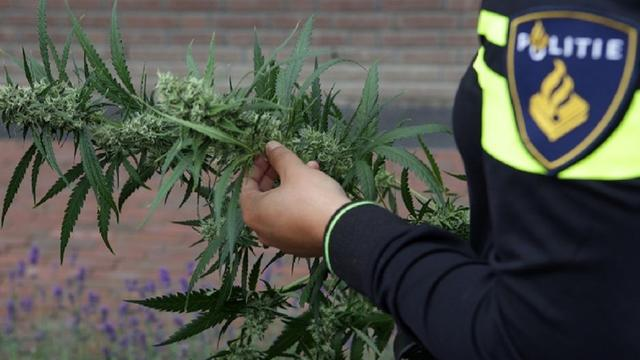 Politie treft hennepkwekerij aan bij aanhouding van winkeldief