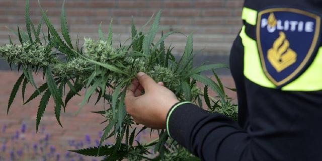 Politie rolt hennepkwekerij met 206 planten in Sint-Maartensdijk op