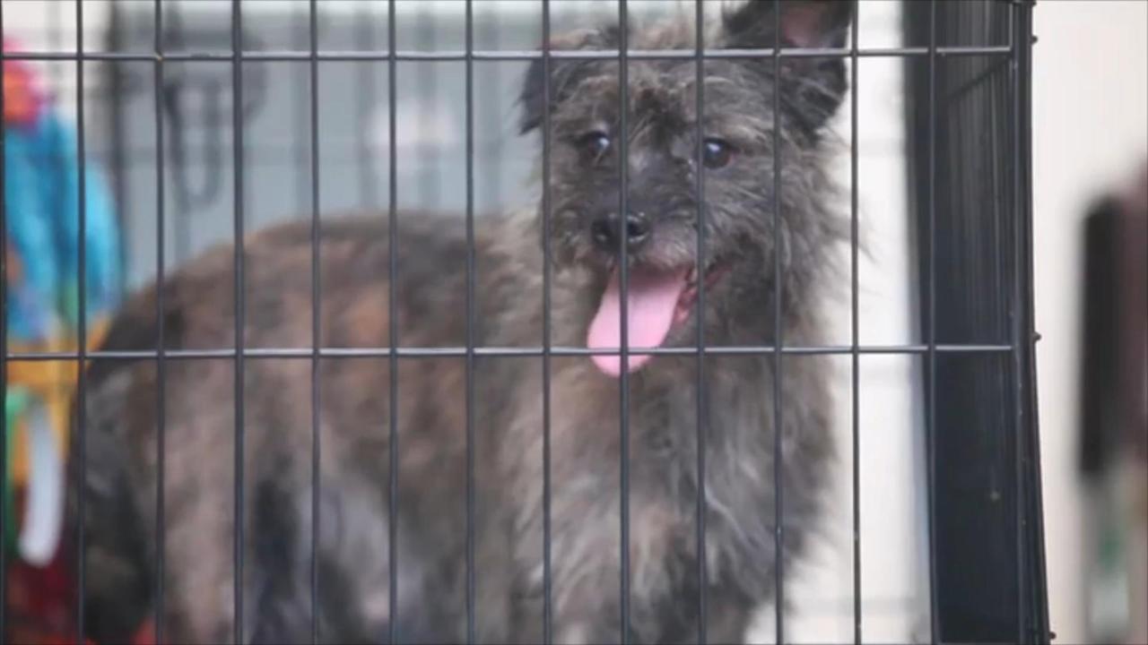 Bijna driehonderd puppy's gered uit huis VS