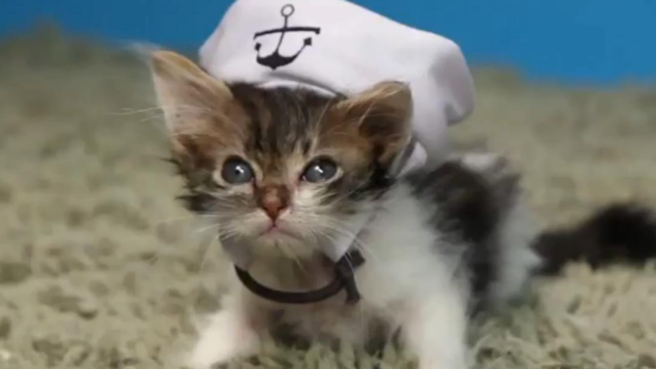Kittens dragen hoedjes