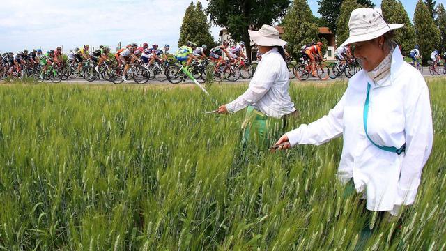 Liveticker Giro: Peloton maakt zich op voor massasprint in rit dertien