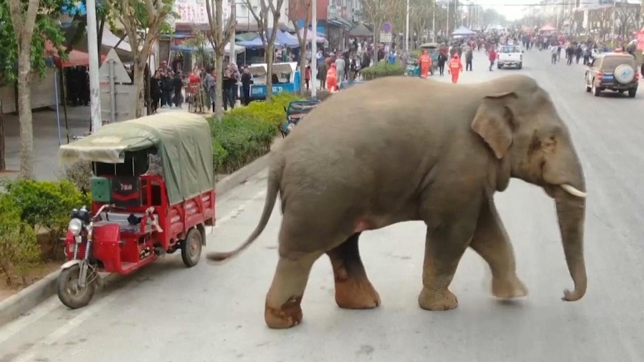Verstoten olifant zorgt voor problemen in Chinese stad