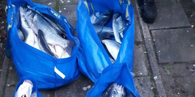 Man in Sluis aangehouden met 81 zeebaarzen in vier tassen
