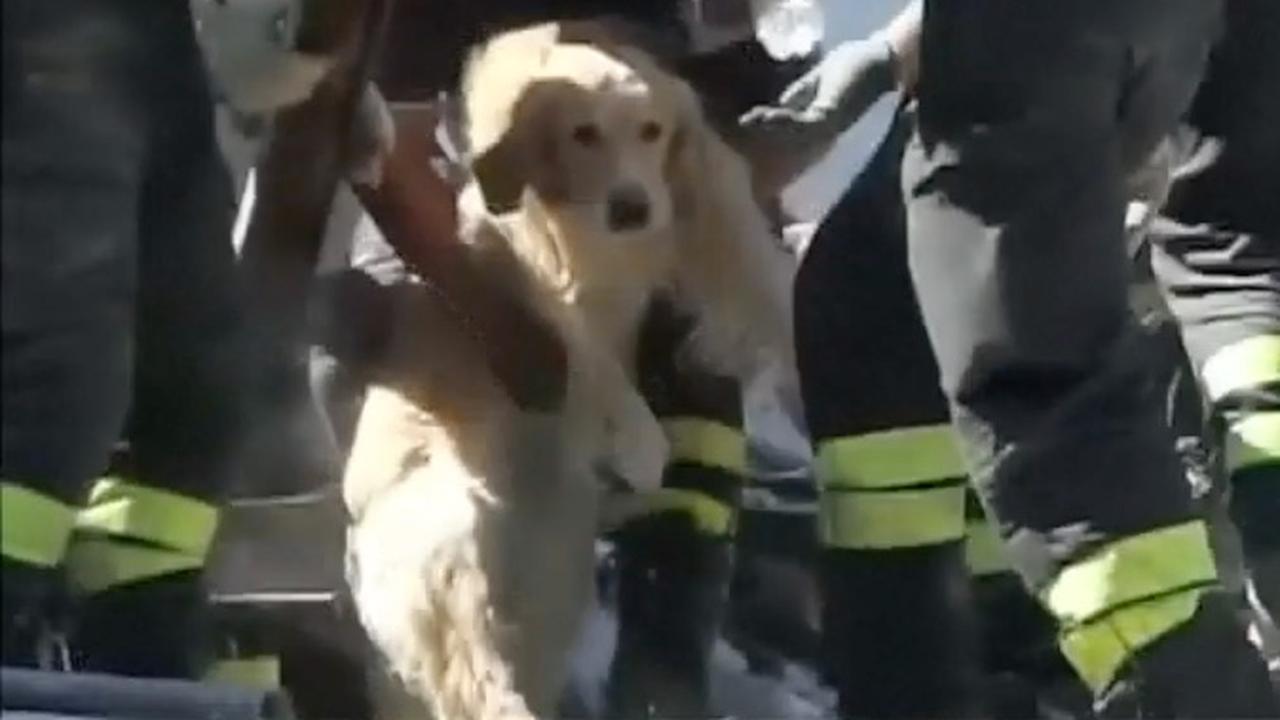 Hond na tien dagen uit puin aardbeving Italië gered