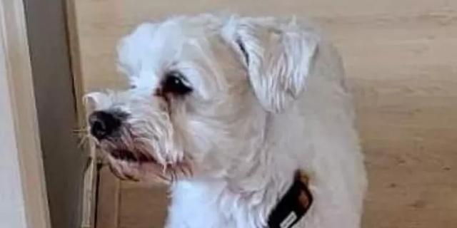Hondje Loeka uit Kamperland na twee weken eindelijk weer terecht