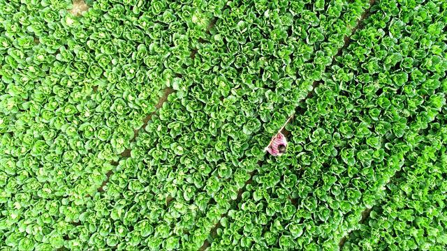 'VS en China steggelen over aankoop van landbouwproducten'