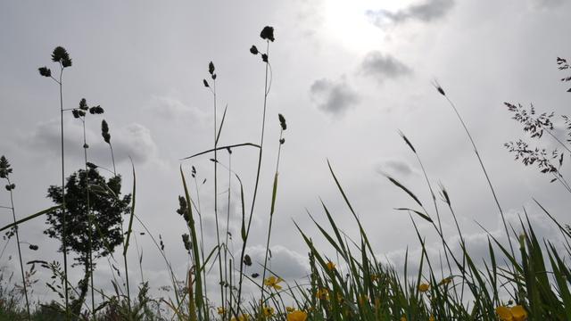 Het weer: Buien nemen af