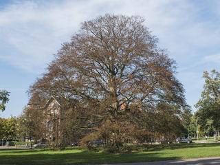 Sensoren houden gezondheid boom in gaten