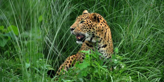 Vliegveld in Nepal kort dicht door 'luipaard'