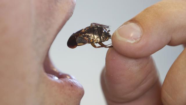 Mijnwerkers Tanzania overleven 41 dagen op kakkerlakken en kikkers