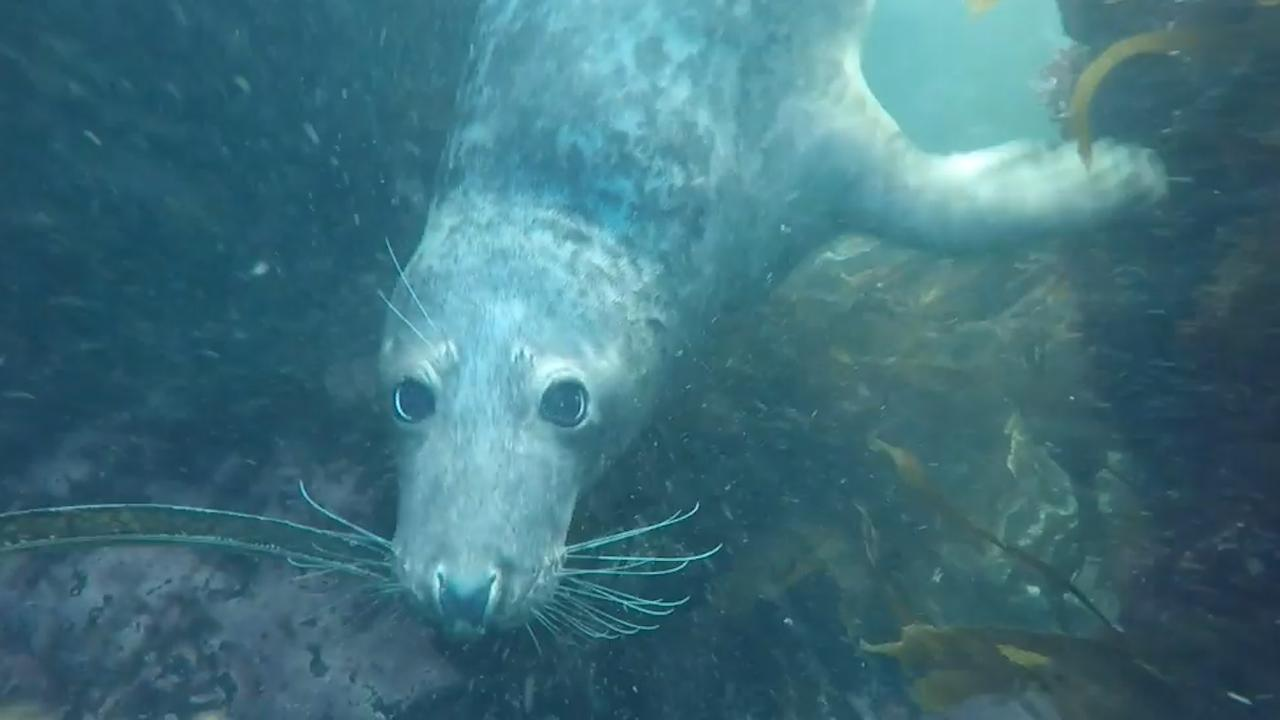 Zeehond raakt verstrikt in visnet voor kust Engeland