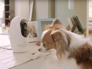 Pawbo+ is slimme camera en speeltje voor huisdier