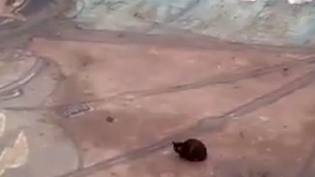 Kat en rat zitten samen vast in Amsterdamse skatekuil