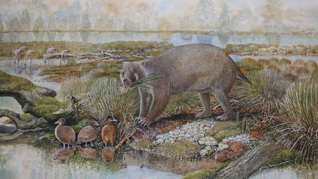 25 miljoen jaar oude voorouder van de wombat was zo groot als een beer
