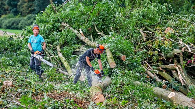 Bomenkap in het Lage Bergse Bos voor nieuwe snelweg start in februari