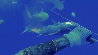 Speervisser bij Cookeilanden verwikkeld in strijd met haaien