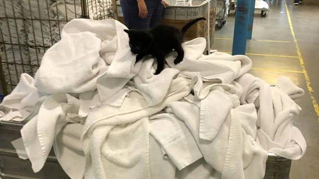 Zwarte kitten gevonden tussen witte was bij wasserette Amsterdam