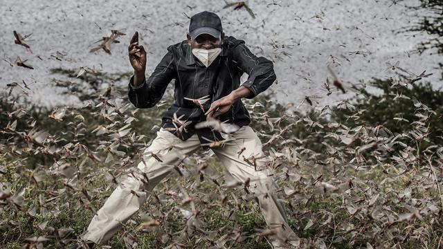 Een man probeert een enorme zwerm sprinkhanen weg te jagen in Kenia. Oost-Afrika kampte maandenlang met een enorme plaag.