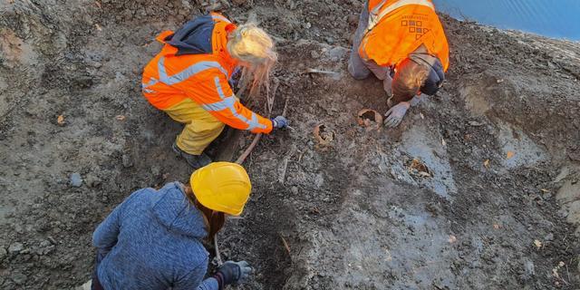 Tientallen mogelijk middeleeuwse skeletten gevonden in Vianen