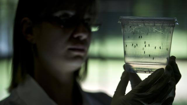 Nederlanders onderzoeken zikavirus in Suriname