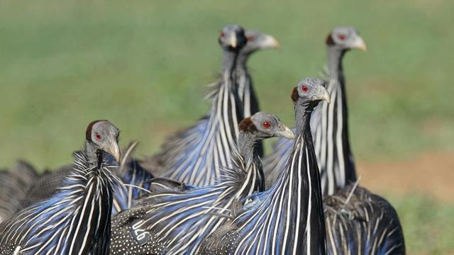 Vogels blijken ook in een complexe samenleving te kunnen leven