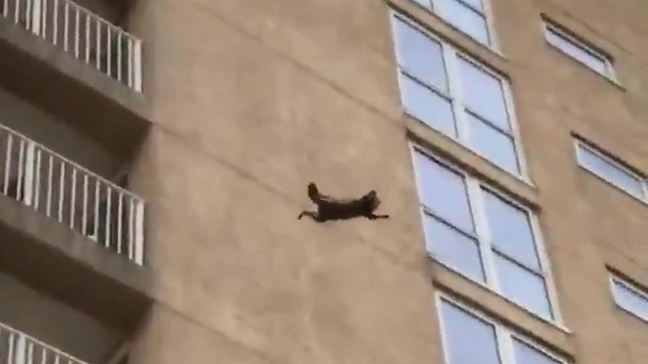 Wasbeer overleeft sprong van hoog flatgebouw in VS