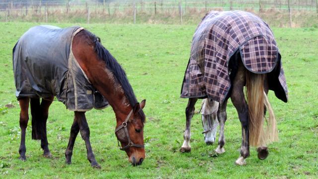 Paarden ernstig mishandeld in Nieuwleusen