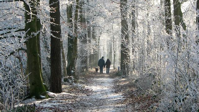 Venloop Kerstloop - Venlo