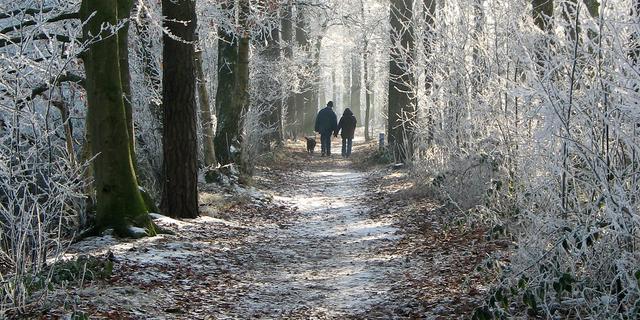 Wandelingen die extra mooi zijn in de winter