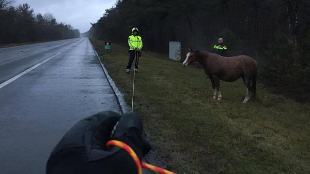 Gelderse politie vangt paard op A28 richting Zwolle