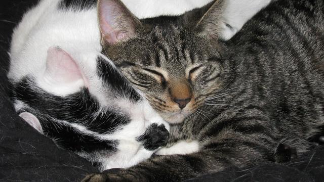 Dierenbescherming toont foto's verdronken katten