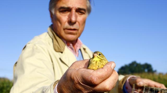 Frankrijk voor hof vanwege traditioneel vogelgerecht