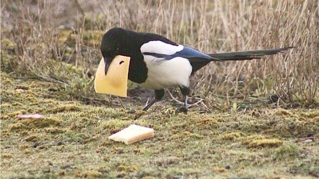 'Vogels massaal uit natuur geroofd'