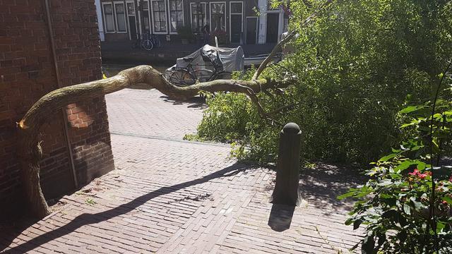 Boom begeeft het bij Oude Rijn