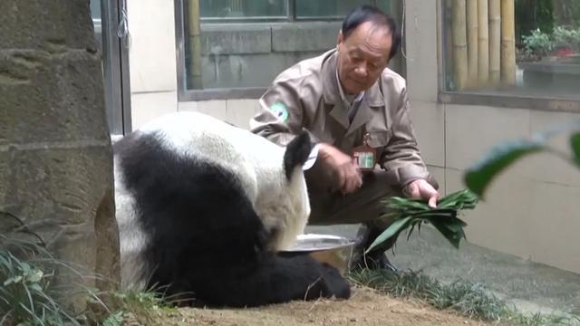 Directeur onderzoekscentrum treurt om dood panda Basi
