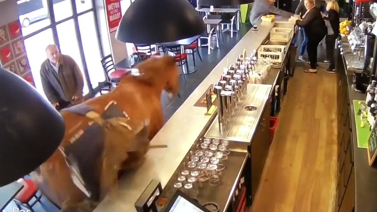 Paard rent Frans gokcafé binnen