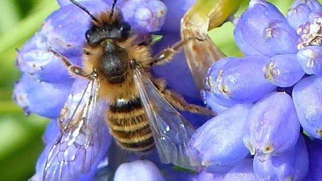 Meer bijen overleefden afgelopen winter in Nederland