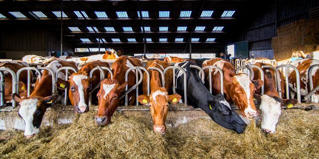 Duurzame plannen Noord-Brabant bedreigen voortbestaan veehouders